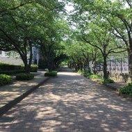 日本大学藤沢高等学校レスリング部(5)